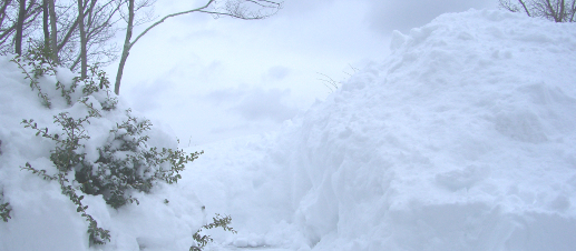 Piles of snow and a snow-covered bush